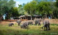 Wilderness Safari Botswana & Simbabwe
