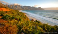 Teil des Table Mountain Nationalparks